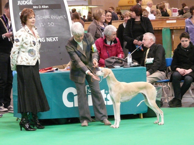 crufts20110lalique.jpg